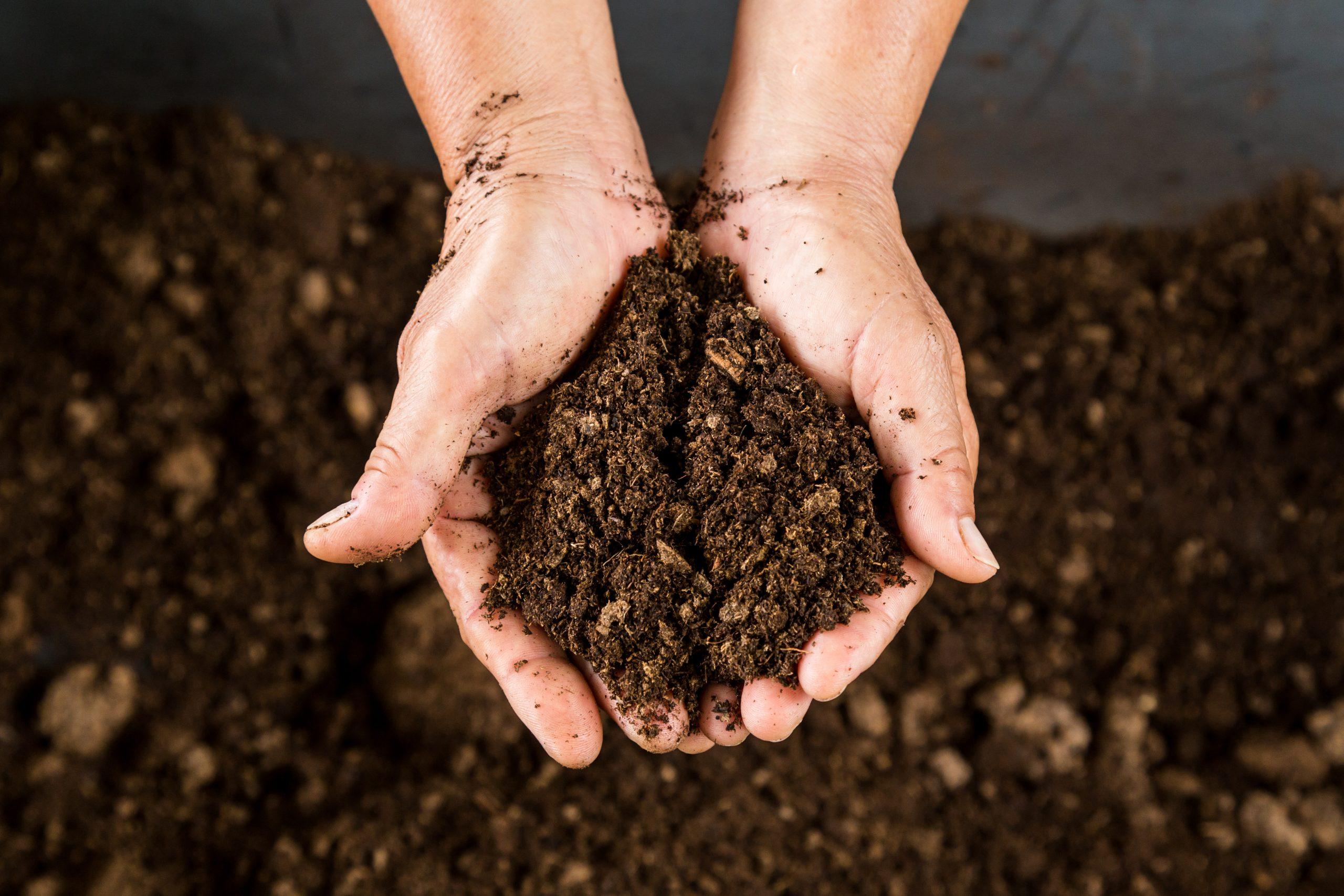 Peat mud