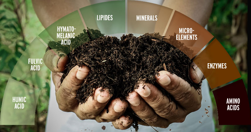 Peat Mud in hand contaiing minerals, fulvic acids, vitamins